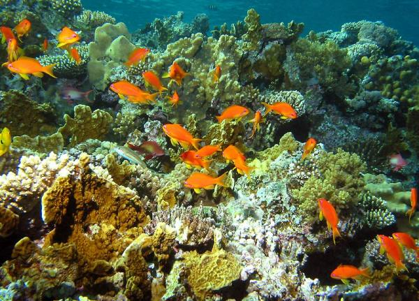 Red-Sea-Egypt (3)
