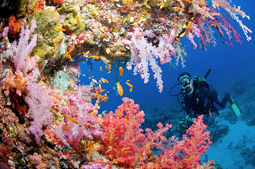 Red-Sea-Egypt
